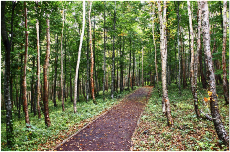 森の入口から続く小路。光があふれ、小鳥の鳴き声も聞こえます。