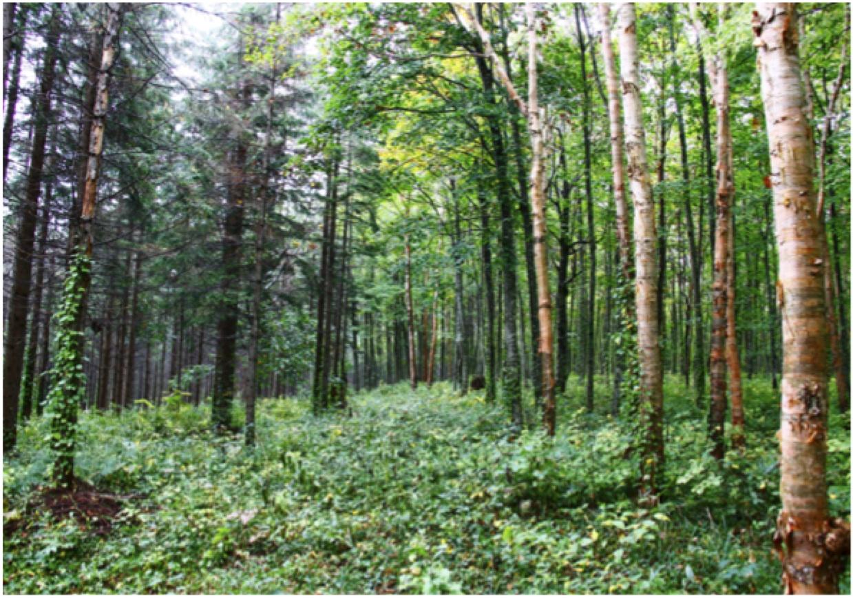 様々な針葉樹(左)と広葉樹(右)が共存し、多彩な景観に。