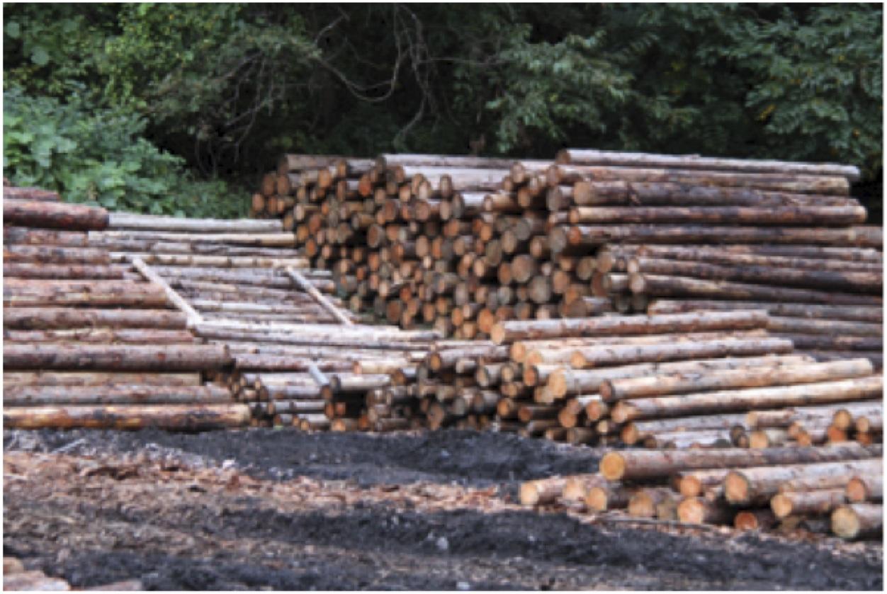 FSCの森から切りだされた木材は大切な「森林資源」。有効に使いたい!