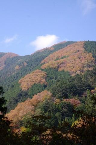檜原村の紅葉