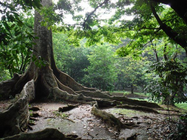 雨が多いことから「雨の街」という愛称で呼ばれるボゴールにある植物園。インドネシアの森の生態そのままを見ることができる。