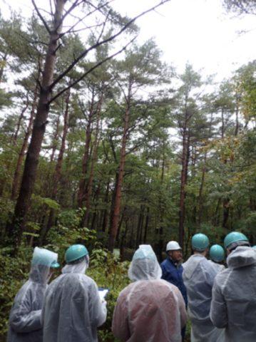 実際に森に入って様々な木を観察することができます