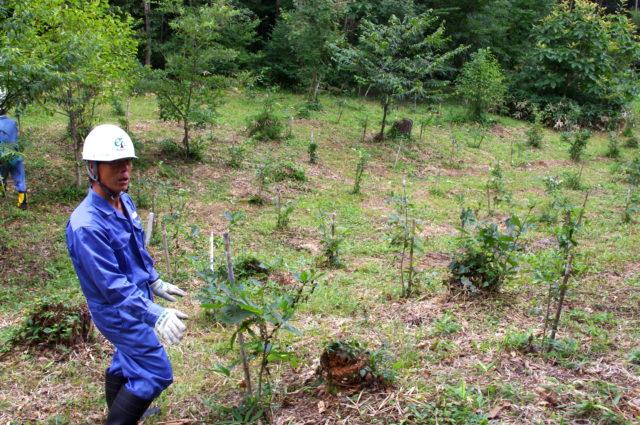 木の生育や植生について実験・観察を行なう「生長の森」。