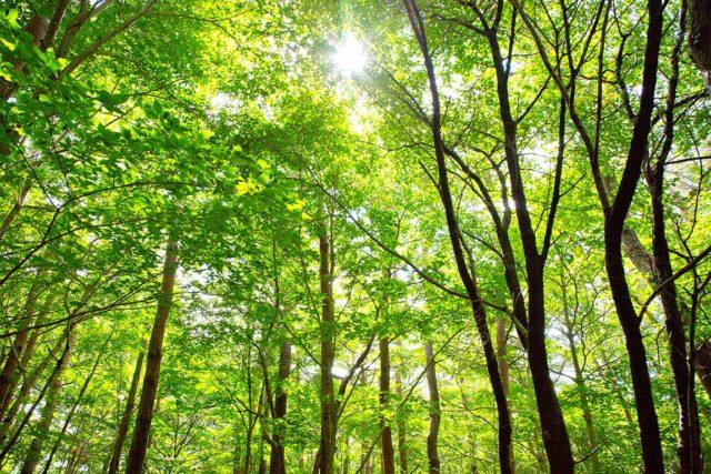 光溢れる落葉広葉樹の森。四季折々で表情が変わります。