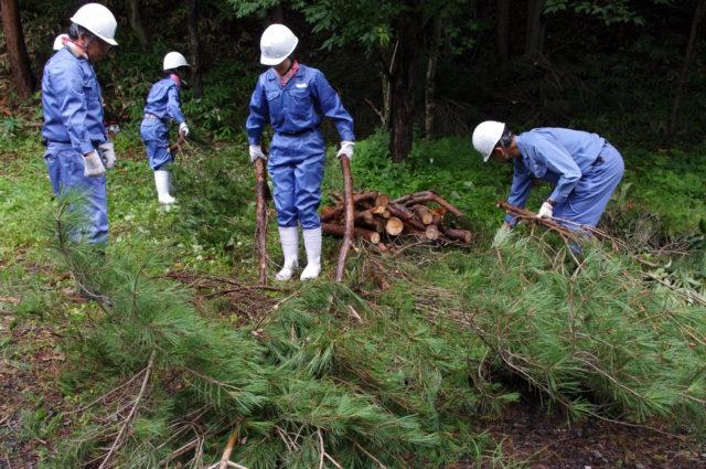 枝打ちや間伐、下草刈りなども社員が実施