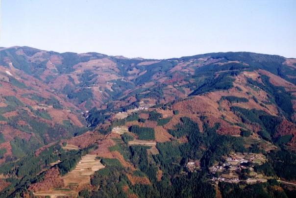 「針葉樹」と「広葉樹」が混在し、美しいモザイク模様を見せる諸塚村の森