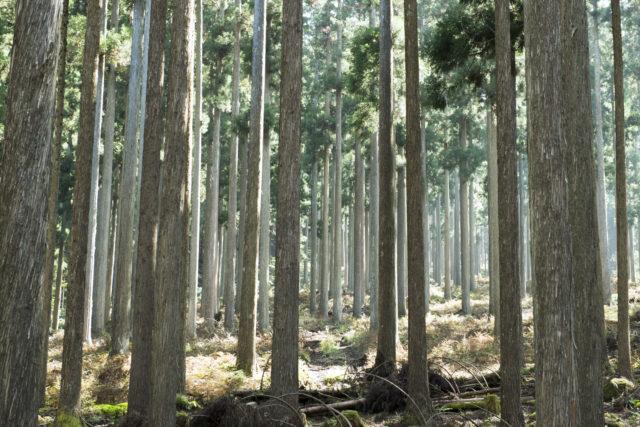 大切に育てられた木々