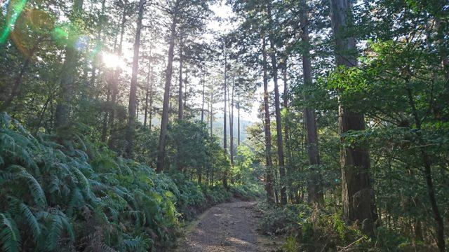 速水林業のFSCの森
