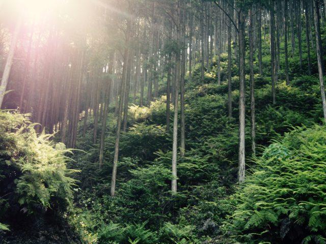 あらゆる命が豊かな森を支えている。