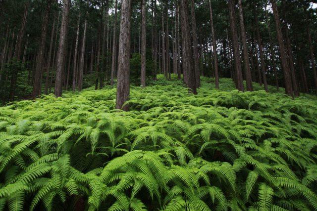 ため息が出るような美しい森は日本の宝物。
