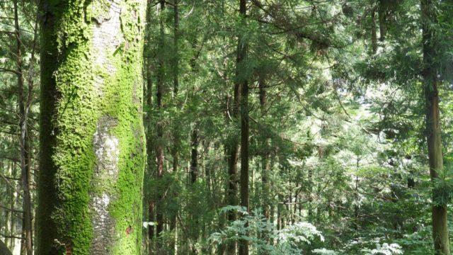 森に薄日が差して