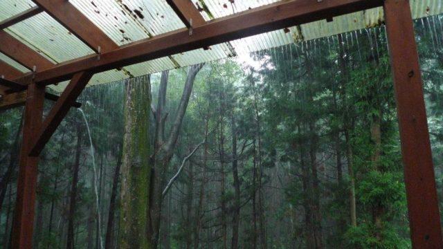 森の激しい雨