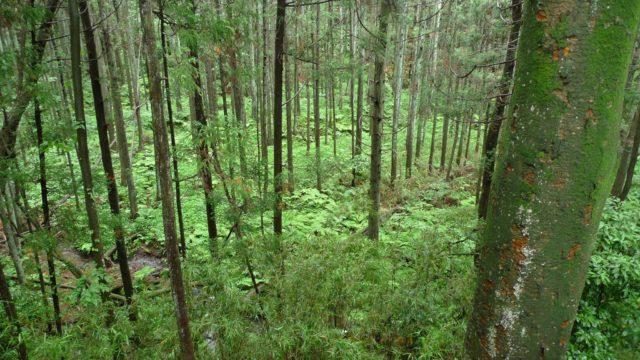 雨が緑を育む