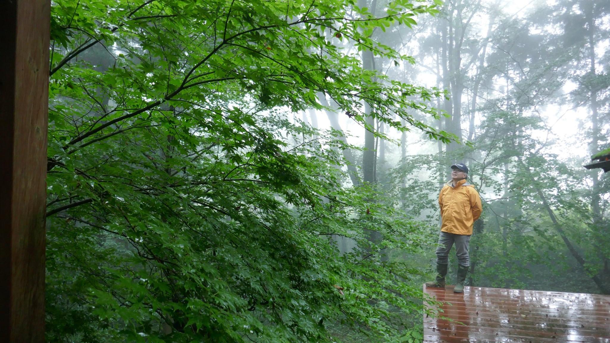 雨の森におでかけ