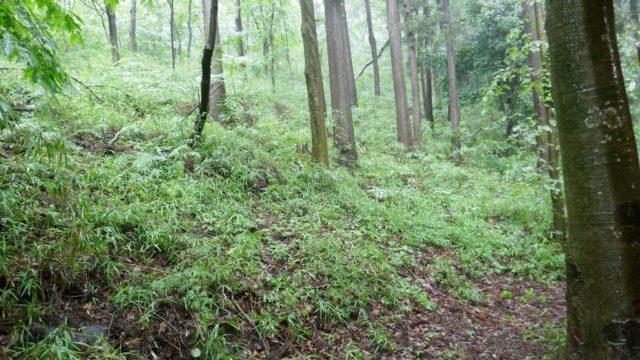 森の保水力